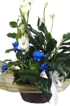Arrangement plante & fleurs
