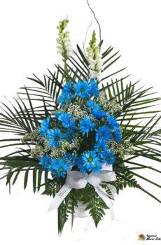 Corbeille de marguerite bleue