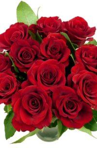 Bouquet de 12 roses rouges