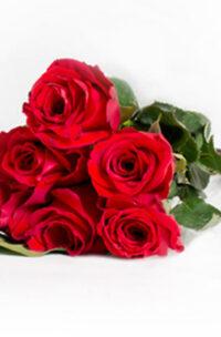 Bouquet de 6 roses rouges
