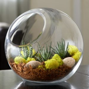 Terrarium de succulent rond