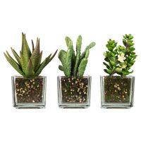 Terrarium de succulent
