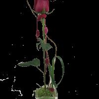 Arrangement 1 rose