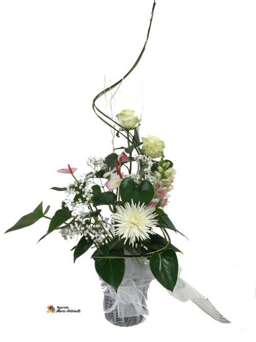 Plante et fleurs