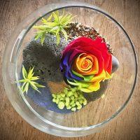 Rose éternelle multicolore