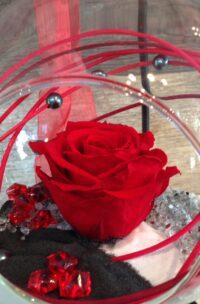 Rose éternelle rouge