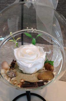 Rose éternelle blanche suspendue