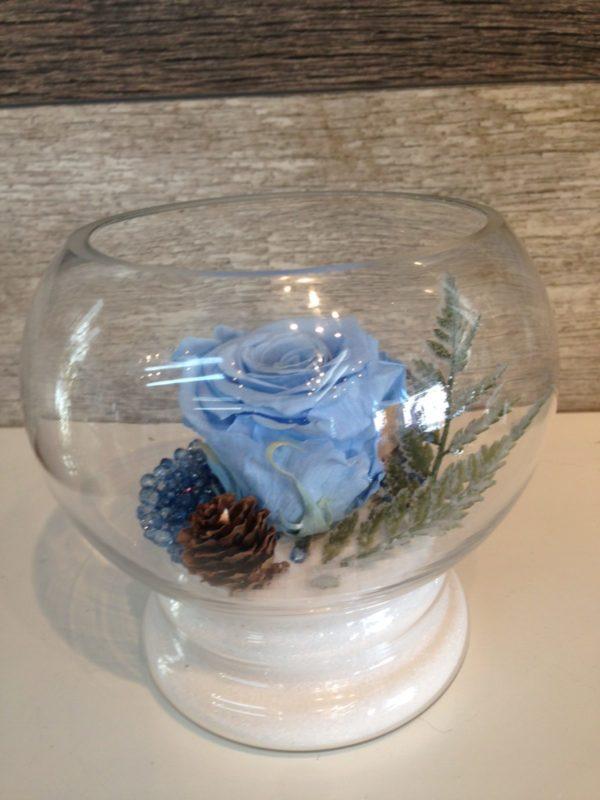 Rose éternelle bleue