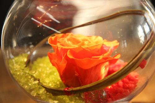 Rose éternelle orange
