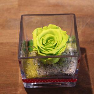 Rose éternelle vert