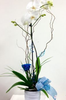 orchidee_roseeternelle