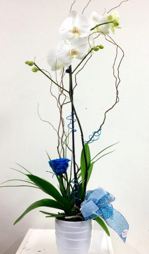 Orchidée blanche et rose éternelle