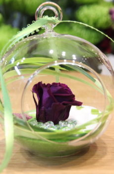 Rose éternelle mauve miniature suspendue