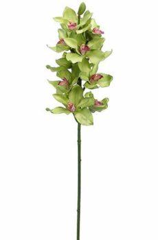 Tige de cymbidium vert 10 fleurs 2 bourgeons