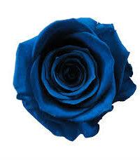 rose eternelle bleu