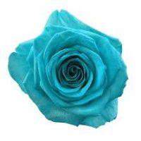 Rose éternelle bleu turquoise