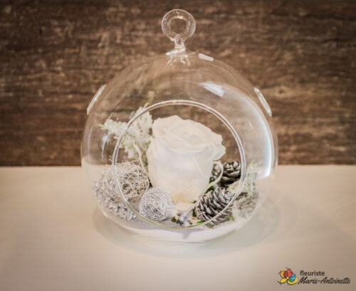 Rose éternelle blanche des fêtes