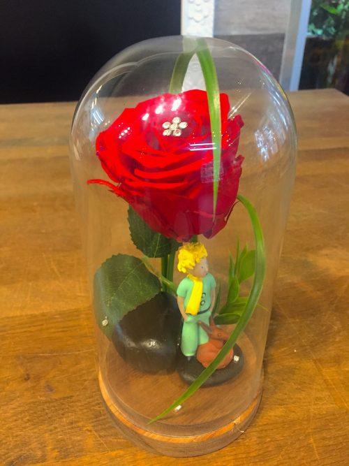 Rose éternelle « Petit prince »