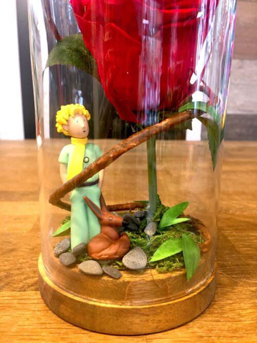 Rose éternelle «Petit prince»
