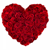 coeur de 50 roses