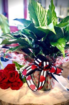 Spathiphyllum de St-Valentin