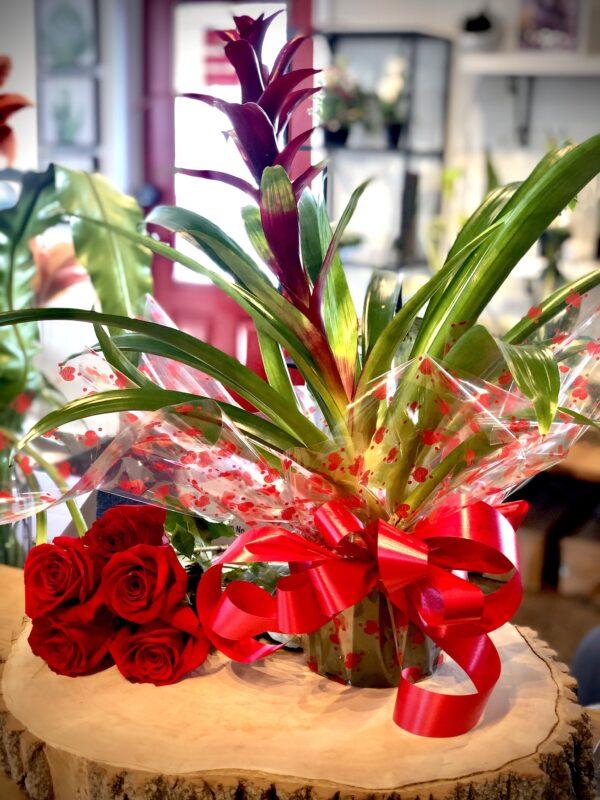 Bromélia de St-Valentin
